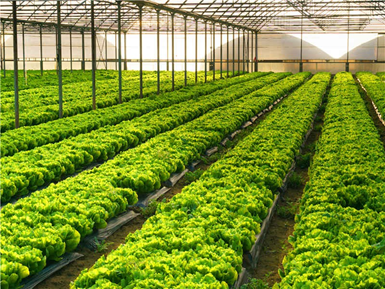 蔬菜大棚种菜新建实验室检测项目及仪器方案