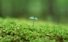 复合肥料养分检测仪实现粮食高产