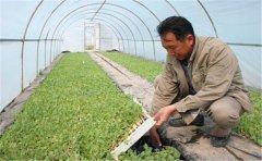 农业测土配方仪的工作程序是怎样的?